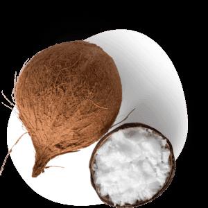 Kokos olie - MCT