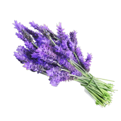 Ekolibi - Lavendel