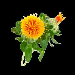 Ekolibi - Saffloer