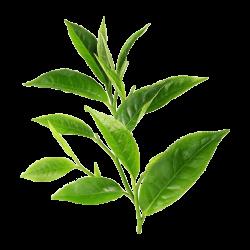 Ekolibi - Tea Tree