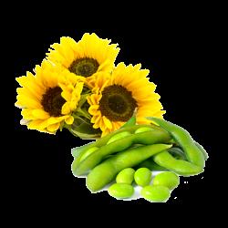 Ekolibi - Vitamine E - Soja - Zonnebloem